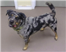 19-386 River grey/black/tan merle male Catahoula mix