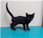 Coal 19-592 black kitten