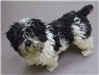 Lilly 19-678. white/black female Shih Tzu