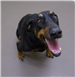 19-701 Ruby black/tan female Doberman mix