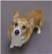 19-704 Hagen tan/white female Corgi