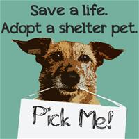 save_a_life_adopt_a_shelter_pet__95351_zoom_thumb.jpg