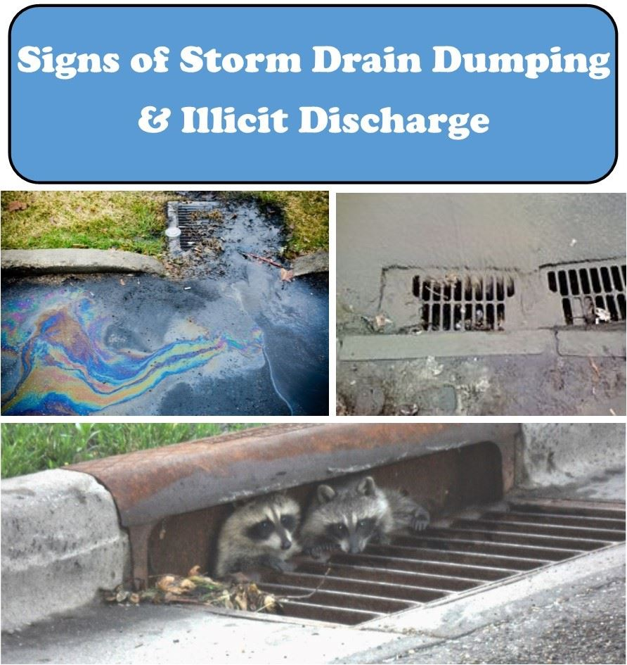 Storm Water Signs of Dumping Poster