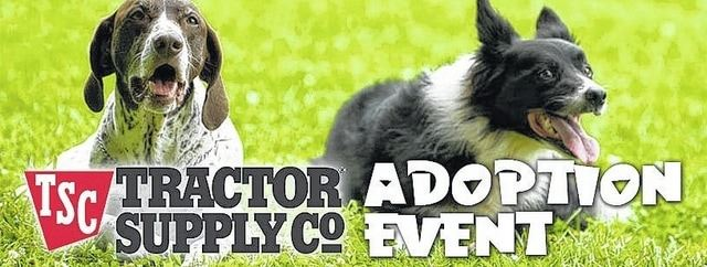 Adoptions - Tractor Supply
