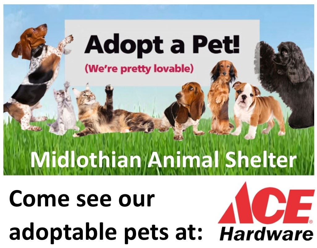 ACE Adoption